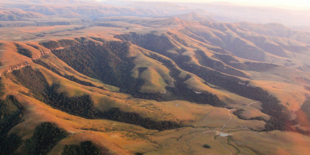 Tekwani Forests on the slopes of Northern Drakensburg mountains