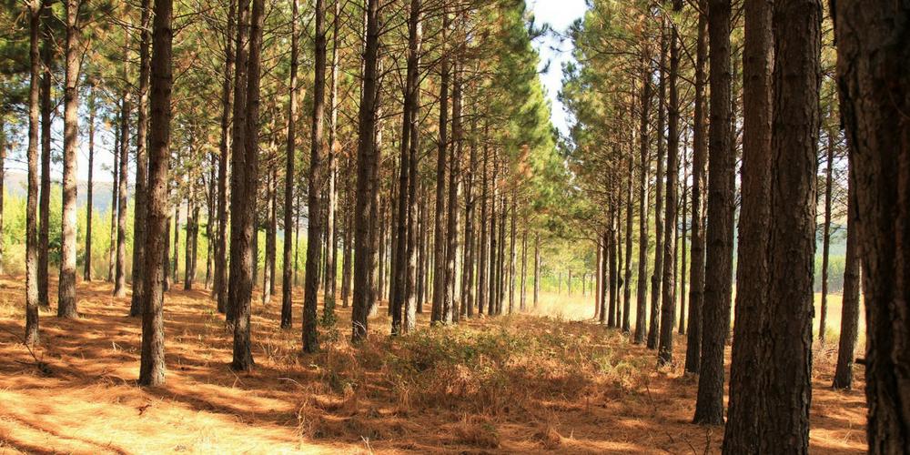 Tekwani Forests